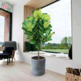 绿植租赁 广州绿植租赁 广州绿植租赁公司 园林绿植租赁价格 绿植租赁多少钱