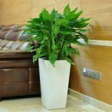 植物租赁 广州园林植物租赁  园林植物租赁  室内园林植物租赁 园林植物租赁价格