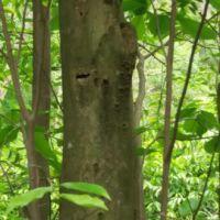供应沉香树的销售供应商|沉香树种植多少钱一颗