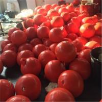 咸阳两半片组合浮球 25公分带吊环浮球