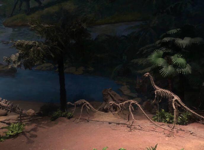 仿真恐龙价格 会动会叫仿真恐龙供应厂家 动物模型制作