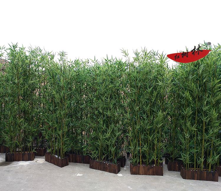供应2米盆竹 直销2米盆竹 2米盆竹供应商 富贵竹批发 2米盆竹厂家