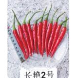 大棵朝天椒种子 长艳2号朝天椒种子 内江种子公司销售 辣椒基地种植