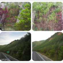 边坡绿化常用植物 挂三维网喷播植草 边坡绿化花卉河南景绣绘远图片