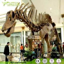 仿真恐龙化石 玻璃钢恐龙化石 仿真恐龙化石骨架 仿真恐龙化石供应厂家 仿真恐龙化石供应商 四川仿真恐龙化石厂家图片