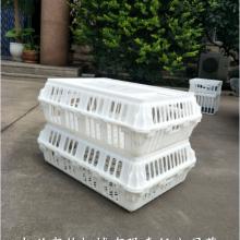 长方形运输鸡笼鸭笼耐摔拉鸡笼运输用塑料鸭笼运输鹅筐批发厂家 运输鸡笼鸭笼