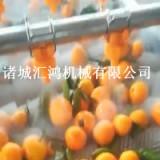 水果橙子毛輥清洗機 自動果蔬清洗機 連續洗橙子機器 匯鴻廠家直銷