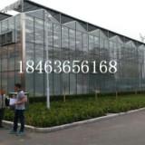 农业温室 山东玻璃温室大棚建设价格