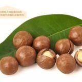 广西夏威夷坚果苗种植基地 桂热1号坚果苗价格 坚果苗种类批发