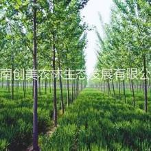 信阳创美林业评估,林业评估公司,林业评估服务