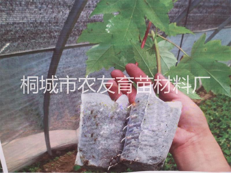 环保可降解育苗容器 环保可降解育苗袋 环保可降解育苗网袋