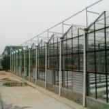 阳光板玻璃连栋温室/顶部阳光板四周玻璃温室图片/山东潍坊建达温室公司设计生产按装