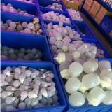 LED柱泡 LED柱泡生產廠家 LED柱泡哪家好 LED柱泡供應商 LED柱泡批發