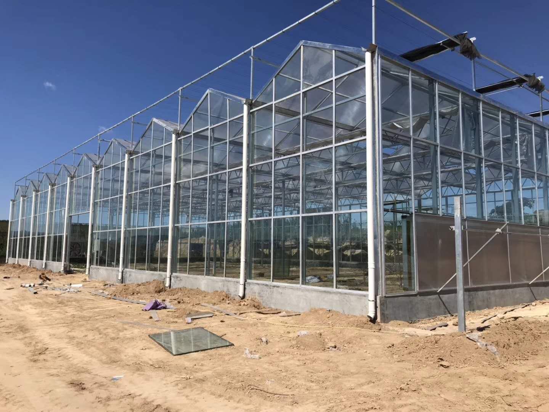 阳光板温室 玻璃温室