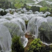 番茄防虫网批发加工的蔬菜防虫网厂家发货