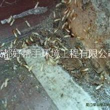 供应内江灭飞蚂蚁公司、隆昌灭飞蚂蚁公司、资中灭飞蚂蚁公司