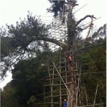 河南扬博防雷公司 古树防雷工程措施特种防雷工程资质批发