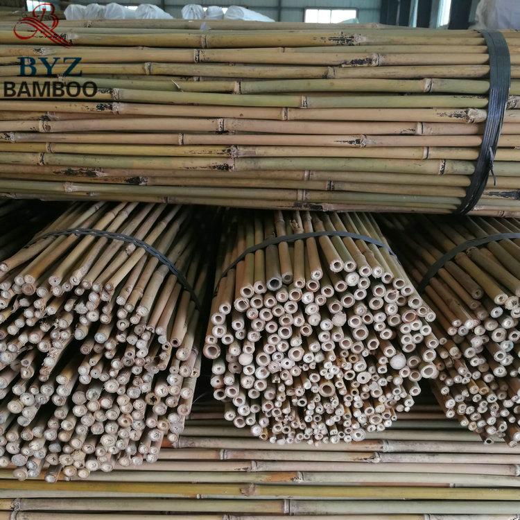 厘竹杆 正宗怀集茶竹杆 低价供应