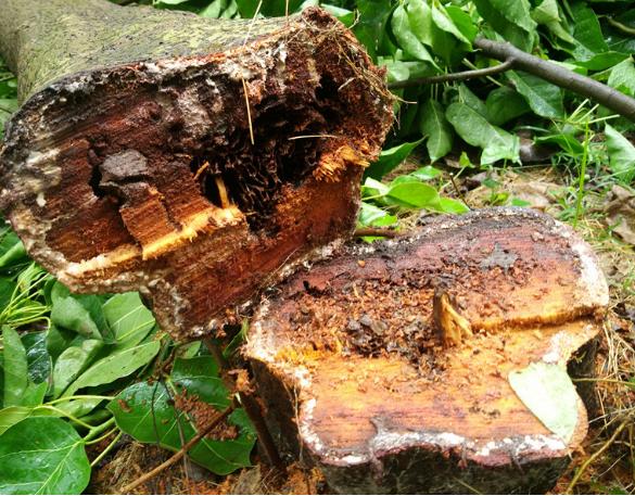 园林树木灭白蚁工程报价/专业团队 园林树木灭白蚁工程电话