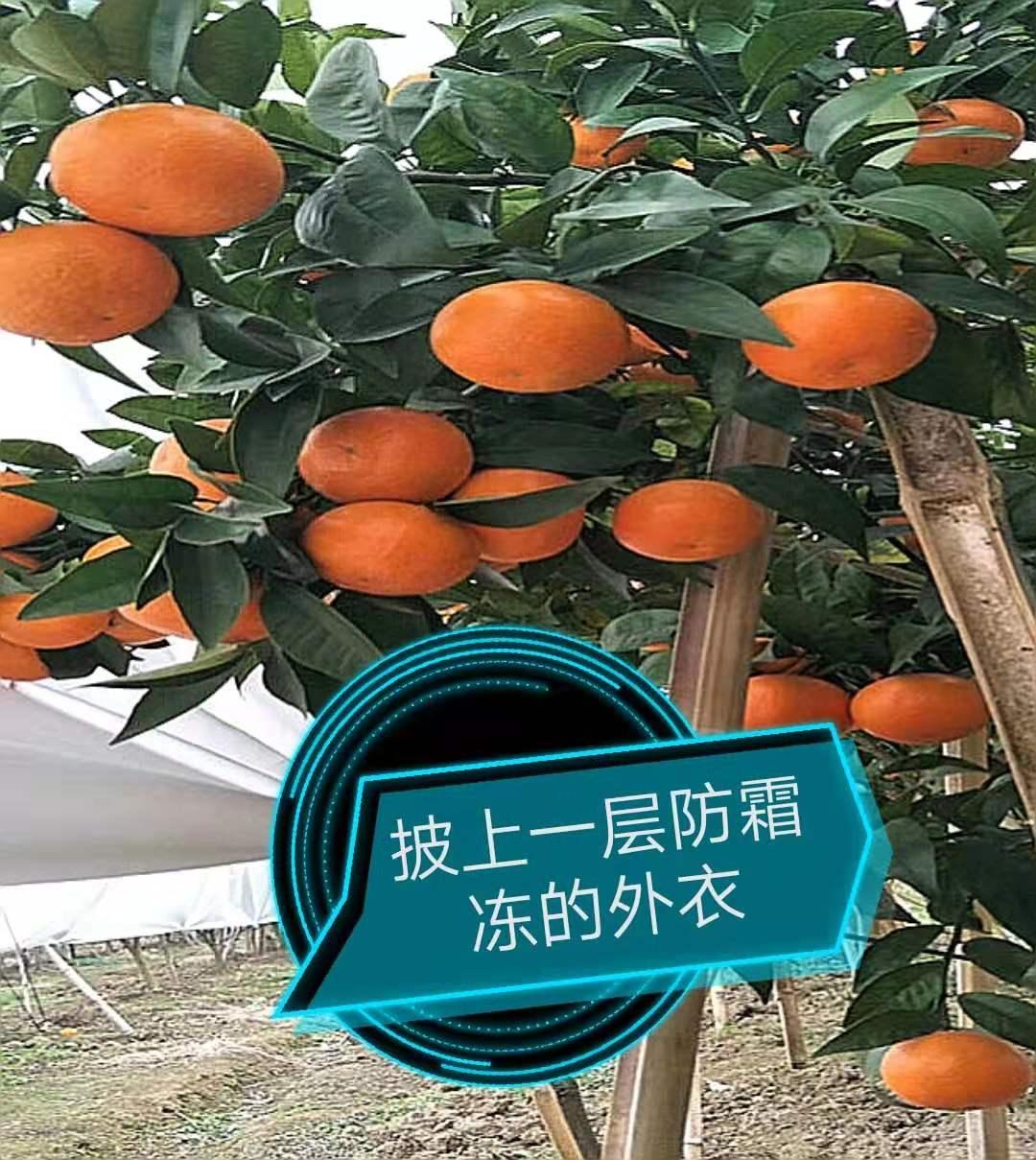 柑橘防寒布 鑫农防寒布  防霜冻