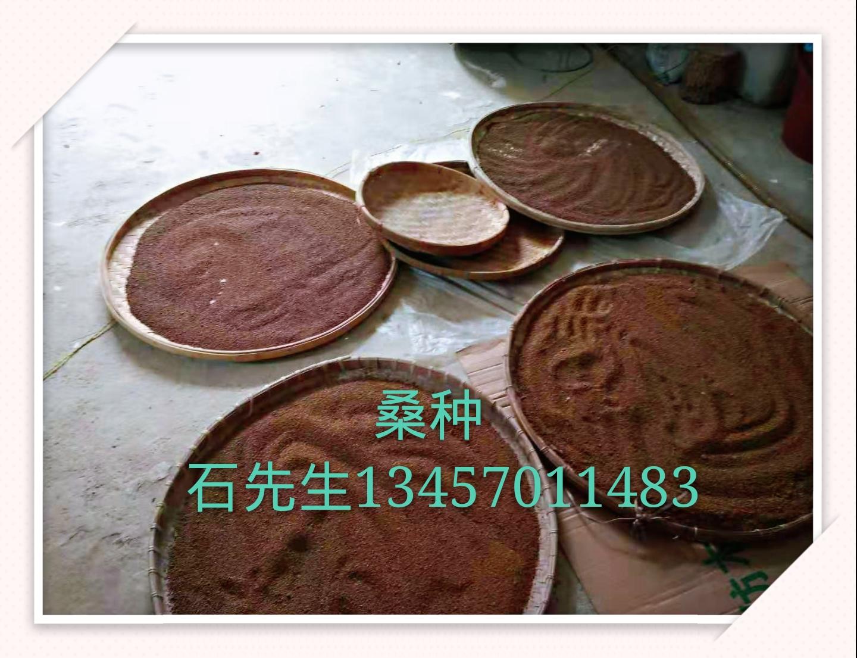 广西南宁桑种优质供应商