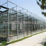甘肃优质的玻璃温室产品