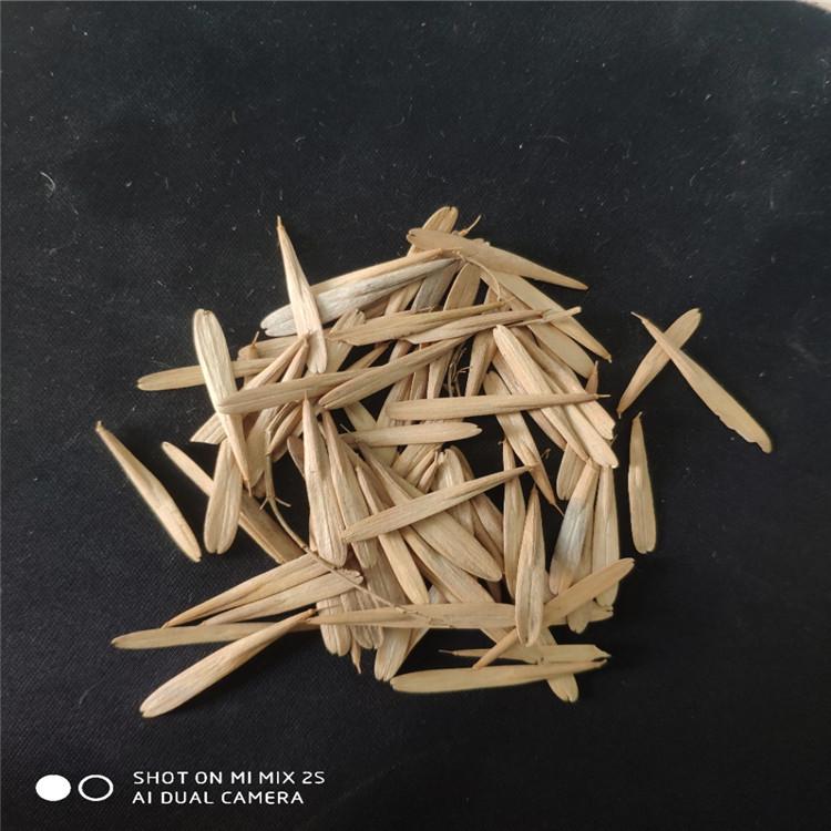 辽宁省铁岭市 白蜡种子 今年采摘 发芽率高