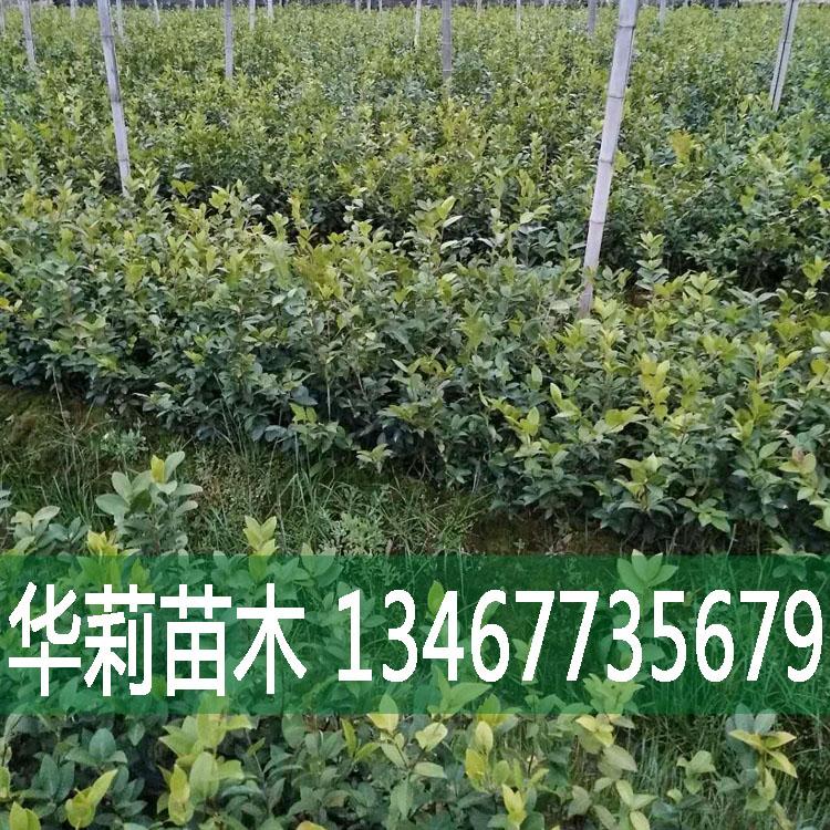 湖南山茶油 厂家直销 优质供应,欢迎订购