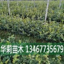 山茶油厂家/价格/批发  大量出售,欢迎订购