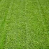 河池市绿化工程草皮价格 绿化草皮批发 长期供应草皮