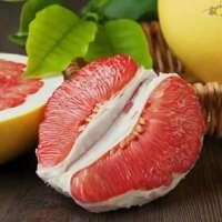 三红蜜柚厂家供应|漳州红心蜜柚直销|红心蜜柚批发 三红蜜柚厂家