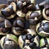 广西玉林油茶种子-玉林市油茶苗油茶种子厂家_供应油茶苗油茶种子批发商价格-【广西珍贵水果苗绿化树苗培育基地】