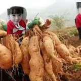 手工自制红薯粉价格 红薯粉怎么做好吃 番薯粉厂家