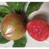 丽水冰糖李果苗供应商    紫琥珀李种苗批发价格电话   厂家直销  种类繁多