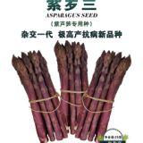紫罗兰∣紫芦笋∣芦笋种子-曹县华东芦笋科技服务有限公司