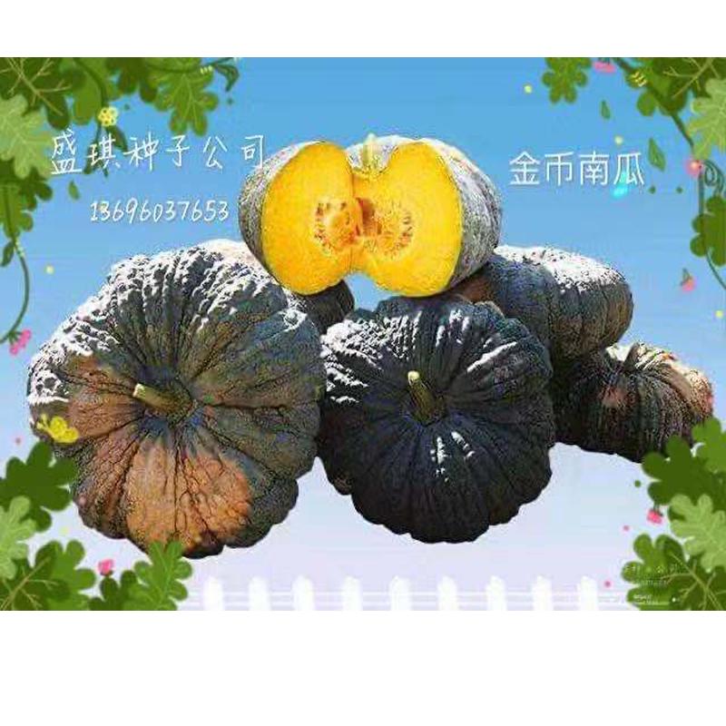 金币南瓜种子 进口南瓜种子价格 南瓜种子怎么催芽 四川种子公司 南瓜栽培技术