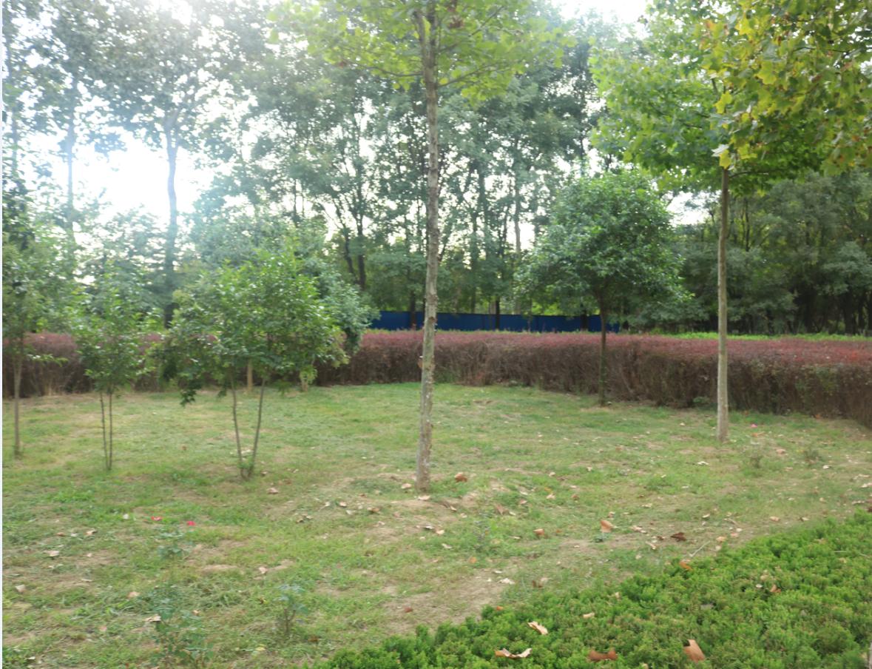 山东寿光工地-园林绿化工程-质量-评价-造价-哪里有-联系电话