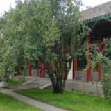 ,百年古树,来绿源苗圃选够 哪里有正宗八棱海棠树
