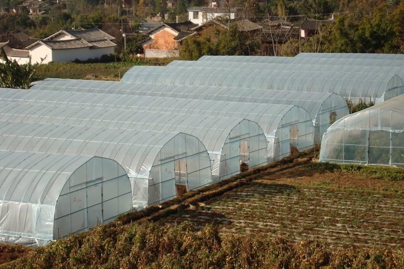蔬菜大棚厂供应商