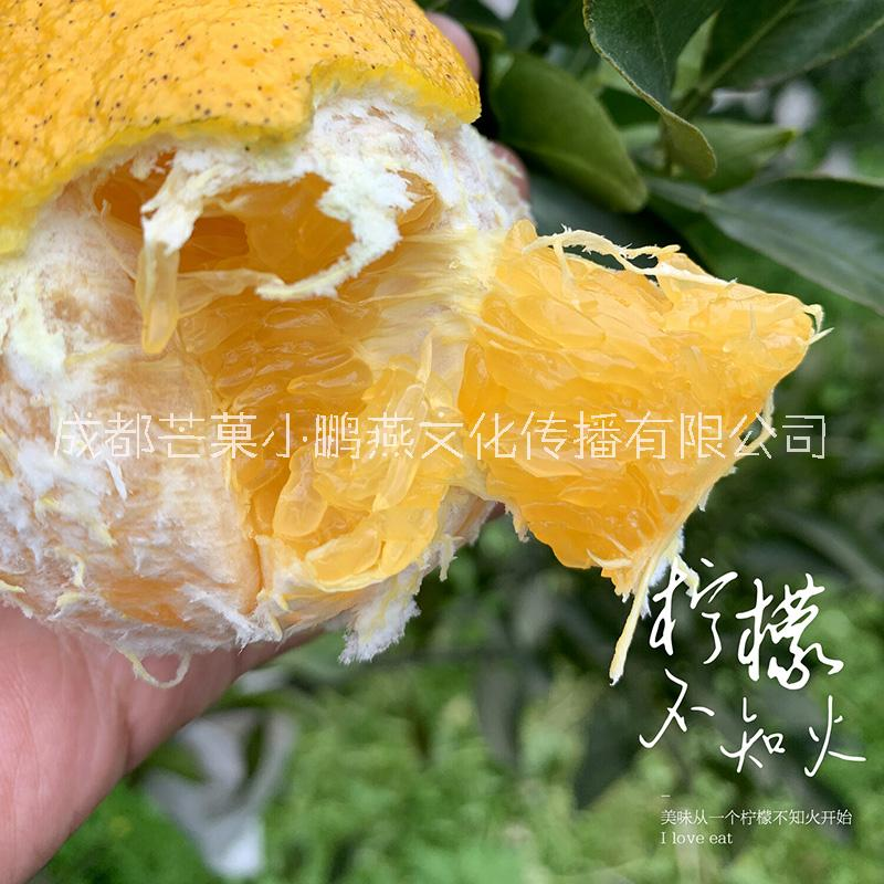 果园直发柠檬不知火 新鲜丑橘 批发 一件代发 包邮包售后