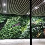 北京展厅植物墙制作 绿植花墙背景墙定制作
