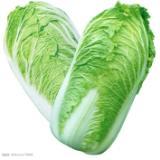东莞市长安蔬菜配送 供应东莞长安工厂蔬菜配送