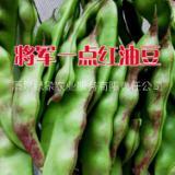 黑龙江油豆种子批发供应,兔子翻白眼油豆种子,正宗东北红金钩,黄金勾油豆种子,将军一点红油豆种子,基地育种批发,供应!