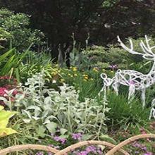 花園、庭院、公園花境設計施工圖片